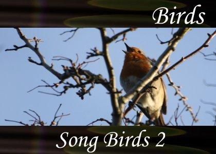SoundScenes - Atmo-Birds - Song Birds 2