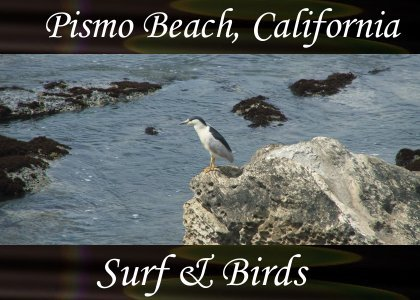 SoundScenes - Atmo-CA - Pismo Beach, Surf and Birds