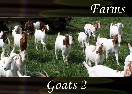 SoundScenes - Atmo-Farm - Goats 2