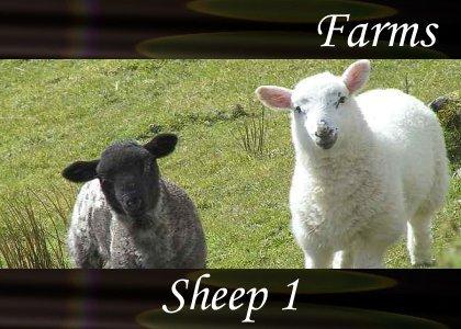 SoundScenes - Atmo-Farm - Sheep 1