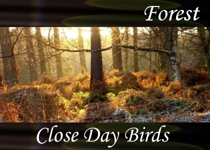 SoundScenes - Atmo-Forests - Close Day Birds