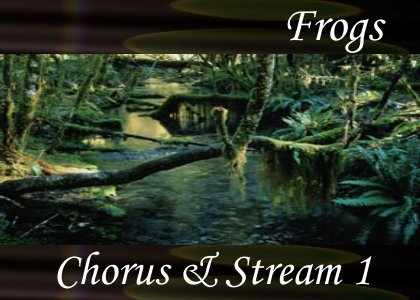 SoundScenes - Atmo-Frogs - Chorus and Stream 1