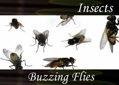 SoundScenes - Atmo-Insects - Buzzing Flies