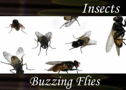Buzzing Flies