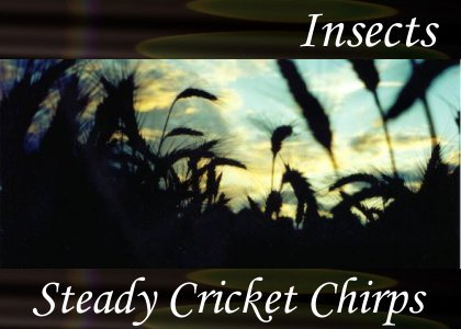 SoundScenes - Atmo-Insects - Steady Cricket Chirps