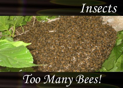 SoundScenes - Atmo-Insects - Too Many Bees