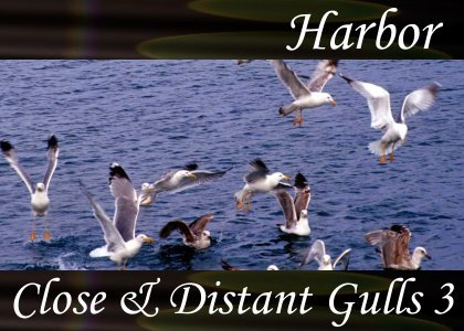 SoundScenes - SL Atmo-Harbor - Close and Distant Gulls 3