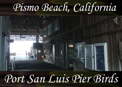 SoundScenes - SL Atmo-Harbor - Port San Luis, Pier Birds 120