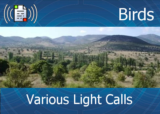 km-atmo-birds - various light calls