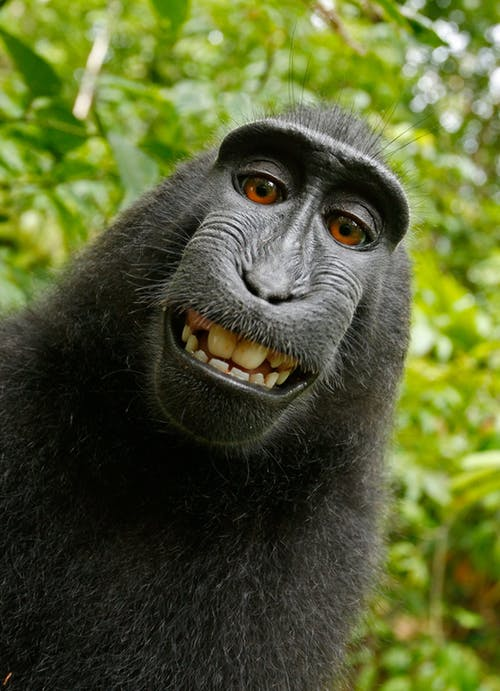 Monkey Smiling at Camera