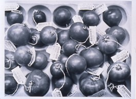 "Catherine Wagner (American, b. 1953), Genetically Engineered Tomatoes, 1994. Gelatin silver print, 17 x 22"". Mildred Lane Kemper Art Museum, Washington University in St. Louis. University purchase, Charles H. Yalem Art Fund, 1996."
