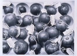"Catherine Wagner (American, b. 1953), Genetically Engineered Tomatoes, 1994. Gelatin silver print, 17 x 22"". Mildred Lane Kemper Art Museum, Washington University in St. Louis. University purchase, Charles H. Yalem Art Fund, 1996."