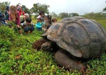 First grade students from the Tomas de Berlanga school meeting a giant Galapagos tortoise. The students were participating in a field trip organized by the Galapagos Tortoise Movement Ecology Programme with the goal of introducing them to giant tortoises and their habitat, and to help them understand the research we are conducting and why we are doing it. (Christian Zeigler)
