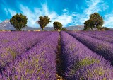 From Paris to Provence, Sept. 8–16, 2014. Cruise the Burgundy wine region, visit the Roman amphitheater in Arles, and enjoy a day in Lyon, one of France's culinary centers. (Courtesy photo)