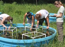 Stock tanks at Tyson Research Center hold artificial pond communities that are manipulated in various ways to explore ecological interactions. (Above) A Tyson crew quantifies and surveys aquatic plants in pond mesocosms. (Courtesy Travis Mohrman)