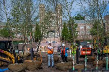 tree planting on east end