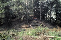 Archaeologists standing on the platform mound at Dyar before it was excavated prior to the construction of the Wallace Dam and Lake Oconee in 1977. (Source: Laboratory of Archaeology, University of Georgia)
