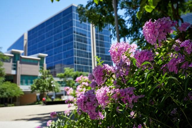 flowers on Hope Plaza