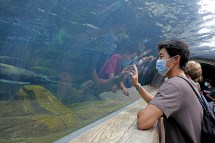 A first-year student watches the sea lions at the St. Louis Zoo on Sept. 3, as part of the Bear Beginnings orientation experience. (Photo: James Byard/Washington University)