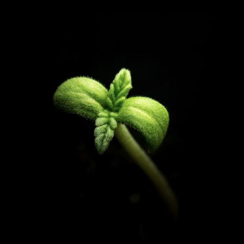 8-HR Botanicals_Spring 2018-1008084_uncredited
