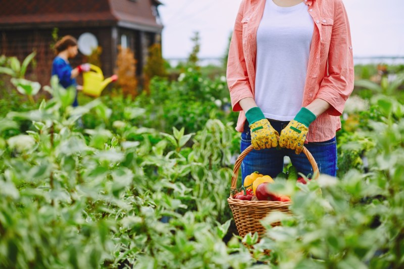 Optimized-graphicstock-female-farmer-standing-in-her-garden-with-big-basket-full-of-vegetables_SJbZROdR7W