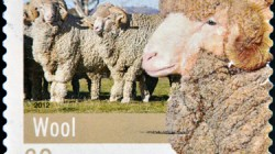 Wool Prices Rise 1.5% February