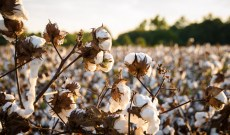 Primark Expands Sustainable Cotton Program to Pakistan