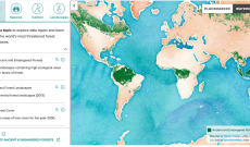Interactive Forestry Tool Aims to Lower Viscose-Sourcing Risks
