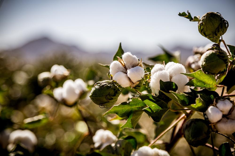 Transformers Catalysts: Denim Experts Champion Traceable Cotton
