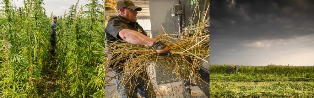 """""""We are working on these partnerships to help restore a thriving U.S. hemp industry that puts farmers first and creates good jobs along every part of the supply chain,"""" Simpson said."""