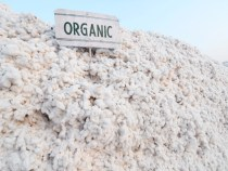 Report: The Truth About Organic Cotton and its Impacts