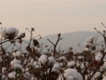 Mozambique Wants to Be the First Country With 100 Percent Better Cotton