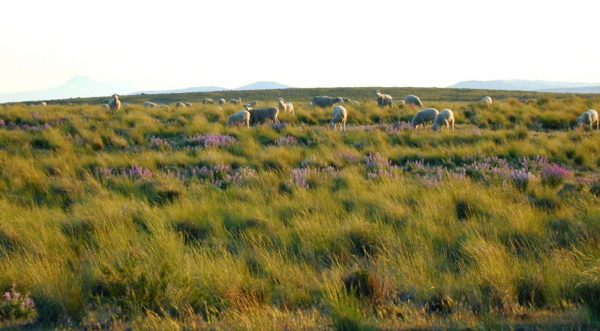Patagonia Wool