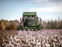 US Cotton Exports Surge, Fed by Vietnam and China