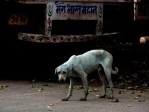 Mumbai Factory Shut Down After Untreated Wastewater Turns Dogs Blue