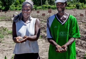 Timberland Steps In to Help Reintroduce Cotton Farming in Haiti