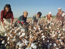 ILO Declares Child Labor in Uzbek Cotton Farming Has Ended