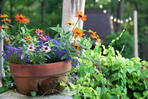Blooming flower pot on back patio