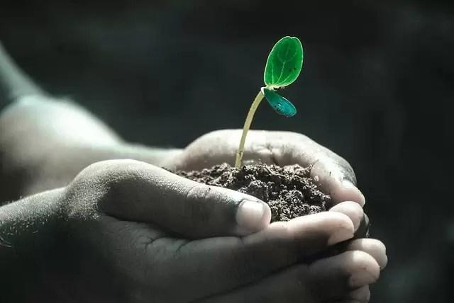 hands, macro, plant