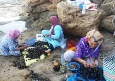 أكادير: وزارة الصيد ترفع المنع عن جمع واستهلاك بوزروك