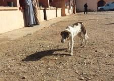 كلاب ضالة تنهش ثلاثة أطفال بأحياء متفرقة بمدينة تيزنيت