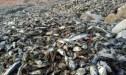 أكادير: كارثة بيئية تهدد شاطئ آنزا والمالوكي يوضح