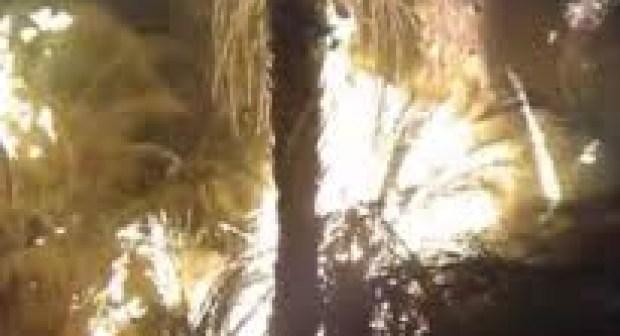 بالفيديو/ كلميم: حريق يلتهم حقول النخيل بجماعة أداي