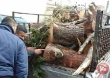تارودانت: أشجار ببلدية أيت إيعزة تجر مستشارا جماعيا إلى العدالة