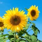 「退職後の夏」に欠かせない日焼け止め「ニベアSUNウォータージェル」