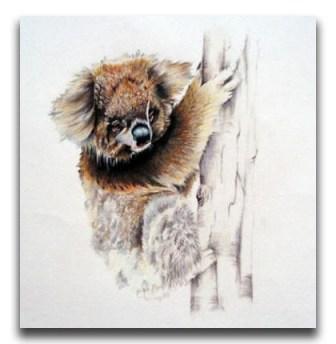 Australias-Beauty-Koala-Emily-Koenders