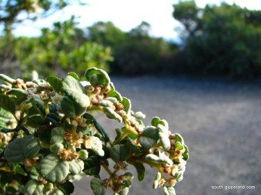 Cape-Liptrap-Coastal-Park (7)