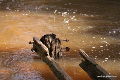 Franklin-River-Reserve (14)