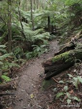 Lilly-Pilly-Gully-walk (14)