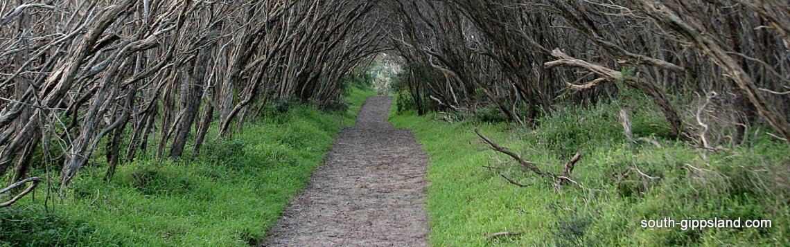sandy bush track